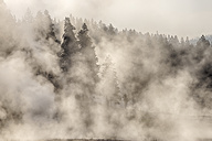 USA, Wyoming, Yellowstone National Park, Firehole Lake Drive, steam from hot springs rising - RUEF001545