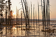 USA, Wyoming, Yellowstone National Park, dead trees in Lower Geyser Basin at sunset - RUEF001556