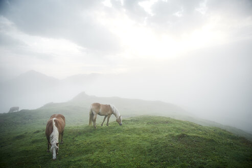 Austria, Kranzhorn, Horses grazing on mountain pasture - MAOF000085