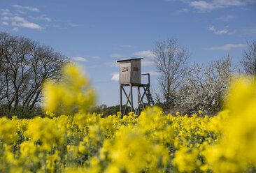 Germany, Brandenburg, raised hide with blossoming rape field in the foreground - ASCF000053