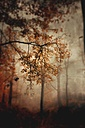 Trees in autumn - DWIF000466