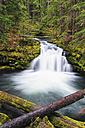 USA, Douglas County, Oregon, Umpqua River, Whitehorse Falls - FOF007867
