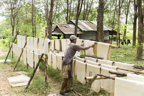 Thailand, Ko Lanta, rolled rubber plates being dried - DR001465