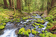 USA, Washington State, Olympic National Park, View of sol duc river, Cascade, Wooden bridge - FOF007887