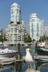 Canada, British Columbia, Vancouver, seagull in front of  district Yaletown - KEBF000015