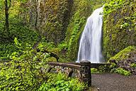 USA, Oregon, Multnomah County, Columbia River Gorge, Wahkeena Falls - FOF007901