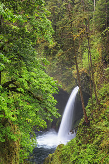 USA, Oregon, Hood River County, Columbia River Gorge, Eagle Creek, Metlako Falls - FOF007896