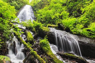 USA, Oregon, Multnomah County, Columbia River Gorge, Fairy Falls - FOF007898