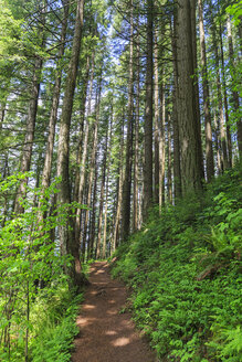 USA, Oregon, Multnomah County, Columbia River Gorge, hiking trail in forest - FOF007903