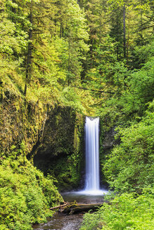 USA, Oregon, Multnomah County, Columbia River Gorge, Ecola Falls - FOF007904