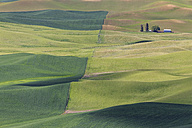 USA, Idaho, Palouse, view to rolling landscape with wheat fields from Steptoe Butte - FOF007920
