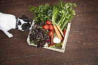 Dog smelling on crate full of fresh vegetables - RHF000692