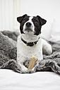 Little dog sitting on bed - RHF000708