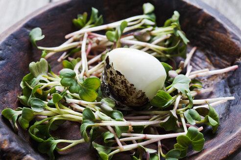 Boiled quail egg on radish cress in wooden bowl - CSF025133
