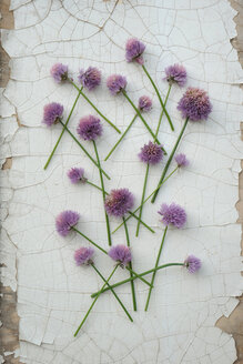 Blossoms of chives - GISF000078