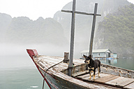 Vietnam, dog at a pearl farm in Halong Bay - MAD000148