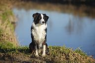 Australian Shepherd sitting in front of water - HTF000701