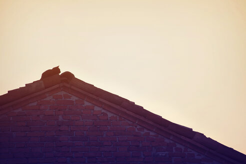 Silhouette of cat lying on roof top at sunset - LSF000048