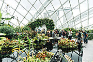 Singapore, Gardens by the Bay, tourists taking pictures in the Cloud Forest dome - GEM000162
