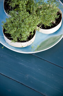 Cress growing in old cardboard boxes - GISF000095
