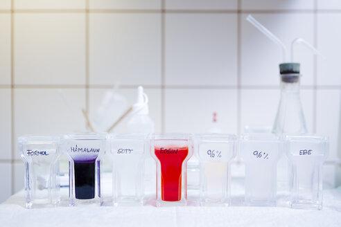 Histological examination with dye bath - DISF001550