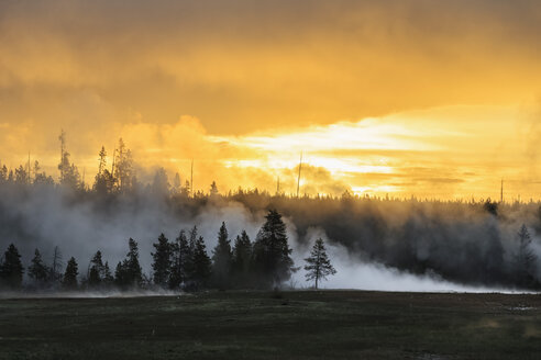 USA, Yellowstone National Park, Morning mood with hot steam - FOF008009