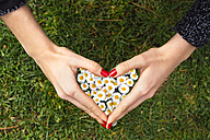 Woman's hands shaping a heart above daisies on the grass - GEMF000188