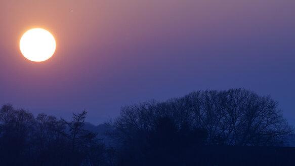 Germany, Minden, sunset at Weseraue - HOHF001332