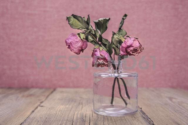 Glass vase with three withered roses - VTF000413 - Val Thoermer/Westend61