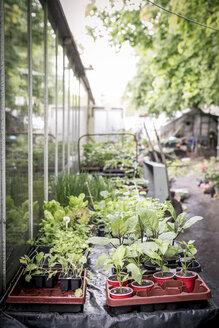 Seedlings in a plant nursery - ASCF000138