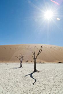 Namibia, Namib Desert, Namib Naukluft Park, Sossusvlei, Deadvlei - CLPF000100