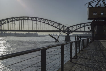 Germany, Cologne, view to Rhine River  with Rhine bridge in the morning twilight - RIBF000008