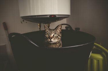 Tabby cat in a rubber basket - RAEF000139