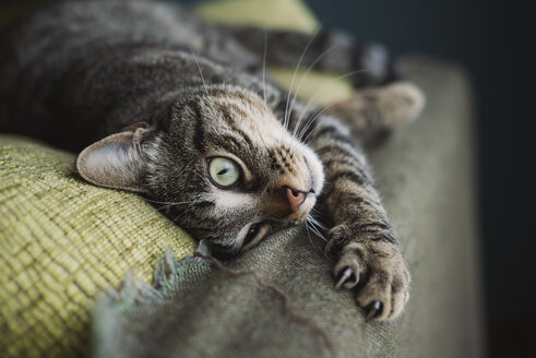 Tabby cat lying on couch - RAEF000141