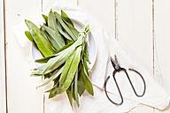 Wild garlic, Allium ursinum, scissors and white cloth - SBDF001777
