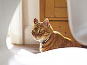 Portrait of a cat - DISF002032