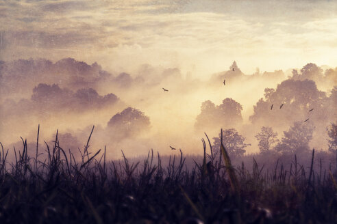 Germany, Foggy landscape at sunrise - DWIF000472