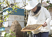 Bulgaria, Pleven, beekeeper with honeycombs - DEGF000397
