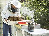 Bulgaria, Pleven, beekeeper with honeycombs and smoker - DEGF000398
