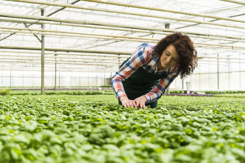 Young female gardener working in plant nursery - UUF003948