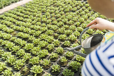 Young female gardener watering plants in nursery - UUF003981
