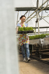 Young female gardener working in plant nursery - UUF003985