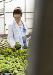 Young female gardener examining plants in nursery - UUF004005