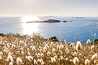Greece, Corfu, Afionas, grasses at the coast - EGBF000032