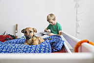 Dog lying on bed with boy using digital tablet - PDF000932