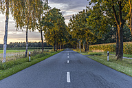 Germany, Gifhorn, tree-lined road in the evening - PVCF000425