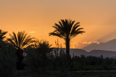 Morocco, Talmasla, palms at sunset - HSKF000021