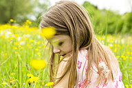 Little girl sitting on a flower meadow - SARF001779