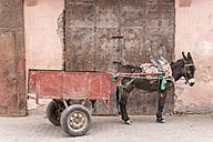 Morocco, Marrakesh, donkey with trailer - HSKF000037
