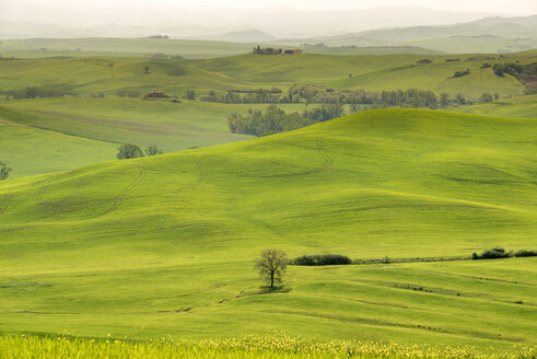 Italy, Tuscany, Val d'Orcia, rolling landscape - MKFF000195